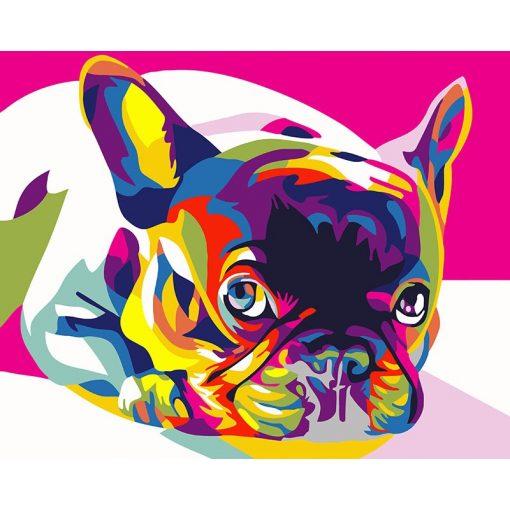 Színes francia bulldog